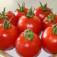 Tomato F1 Orkado - Indeterminate type - 15 seeds